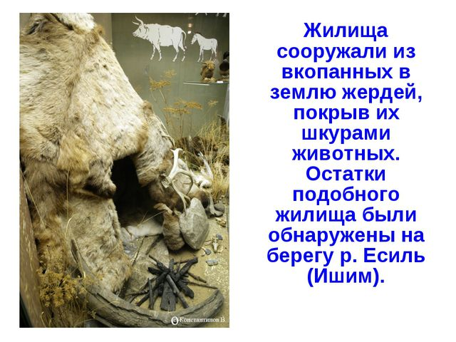 Жилища сооружали из вкопанных в землю жердей, покрыв их шкурами животных. Ос...
