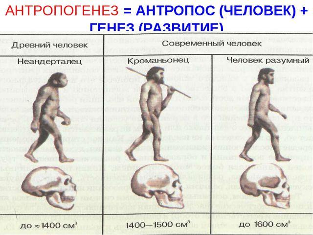АНТРОПОГЕНЕЗ = АНТРОПОС (ЧЕЛОВЕК) + ГЕНЕЗ (РАЗВИТИЕ)