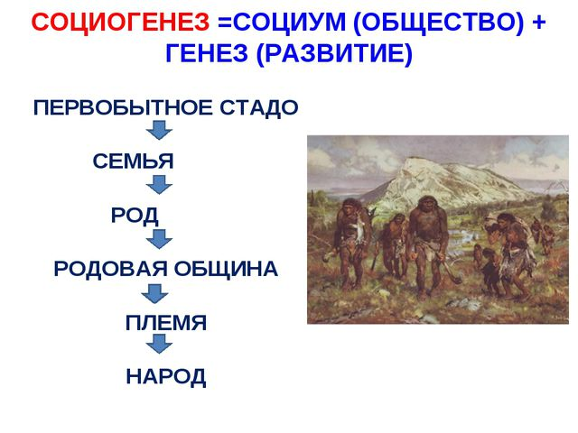 СОЦИОГЕНЕЗ =СОЦИУМ (ОБЩЕСТВО) + ГЕНЕЗ (РАЗВИТИЕ) ПЕРВОБЫТНОЕ СТАДО СЕМЬЯ РОД...