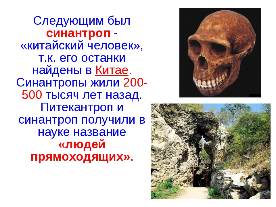 Следующим был синантроп - «китайский человек», т.к. его останки найдены в Ки...