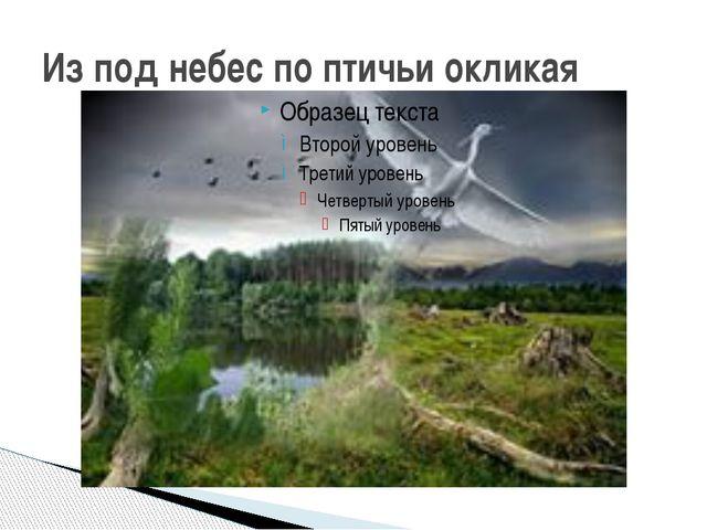 Из под небес по птичьи окликая