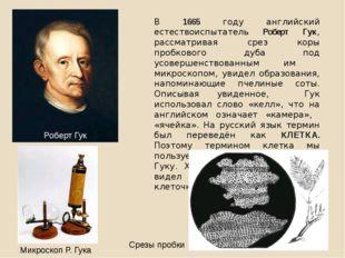 В 1665 году английский естествоиспытатель Роберт Гук, рассматривая срез коры