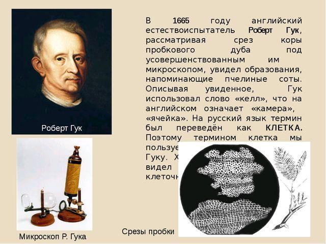 В 1665 году английский естествоиспытатель Роберт Гук, рассматривая срез коры...