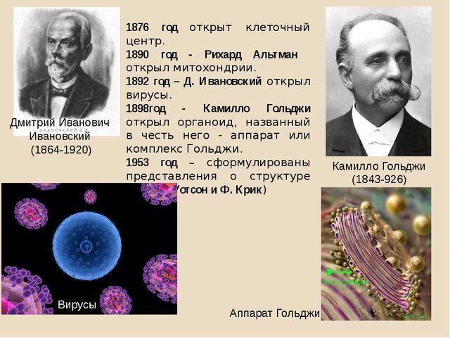 1876 год открыт клеточный центр. 1890 год - Рихард Альтман открыл митохондрии...
