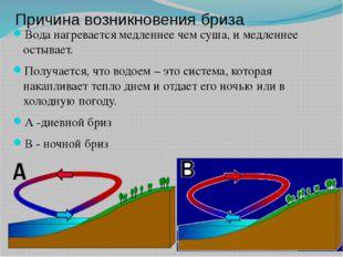 Причина возникновения бриза Вода нагревается медленнее чем суша, и медленнее