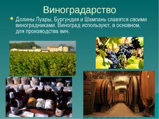 Виноградарство Долины Луары, Бургундия и Шампань славятся своими виноградника