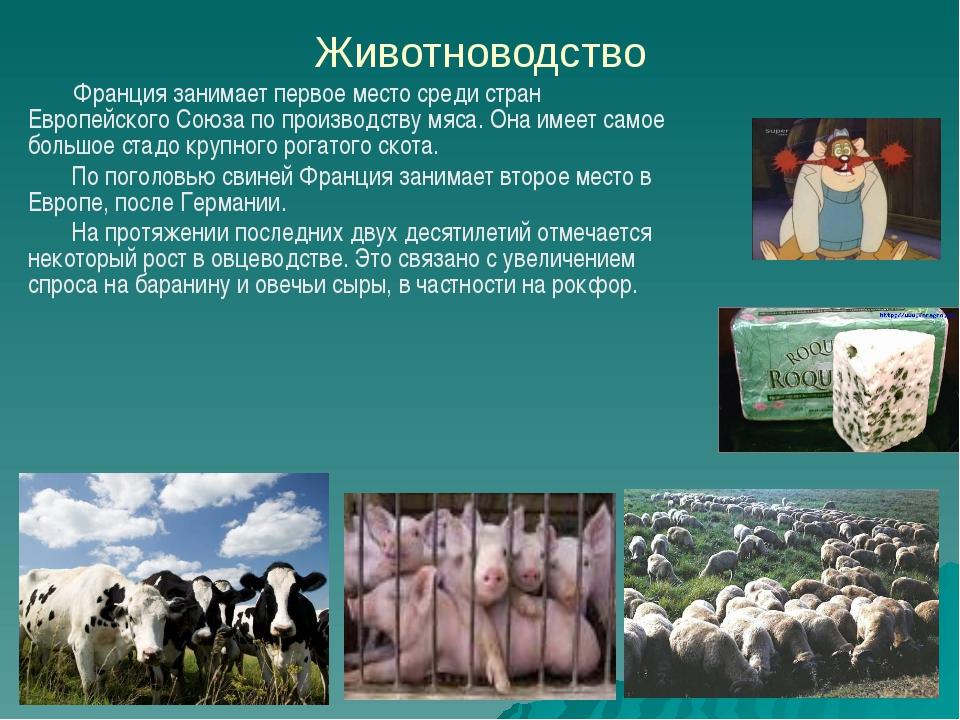 Животноводство Франция занимает первое место среди стран Европейского Союза п...