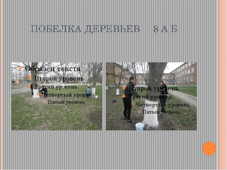 ПОБЕЛКА ДЕРЕВЬЕВ 8 А Б