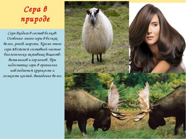 Сера входит в состав белков. Особенно много серы в белках волос, рогов, шерст...