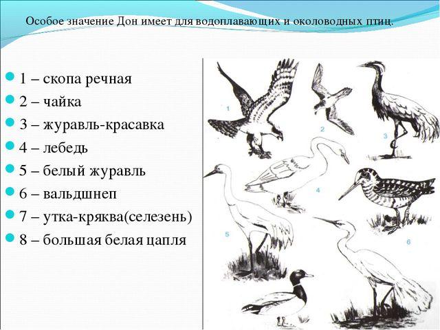 1 – скопа речная 2 – чайка 3 – журавль-красавка 4 – лебедь 5 – белый журавль...