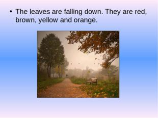 The leaves are falling down. They are red, brown, yellow and orange.