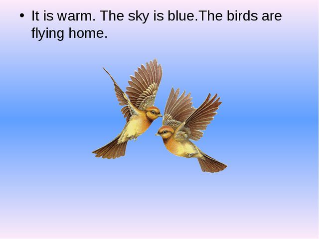 It is warm. The sky is blue.The birds are flying home.