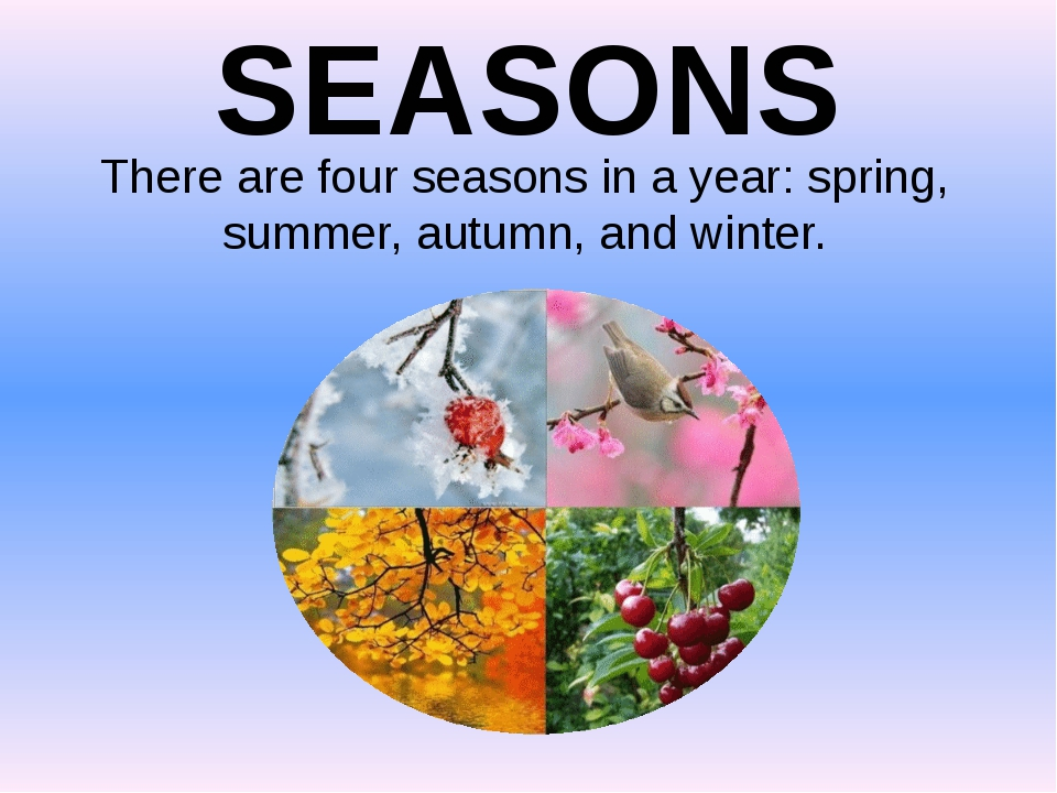 SEASONS There are four seasons in a year: spring, summer, autumn, and winter.