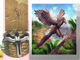 2.Жәндіктердің алуан түрлілігі 1.Гүлді өсімдіктер,жалпақ жапырақты ағаштар 3.