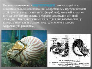 Первые головоногие - наутилоидеи смогли перейти к освоению свободного плавани