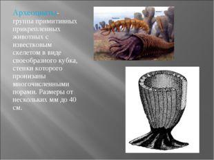 Археоциаты- группа примитивных прикрепленных животных с известковым скелетом