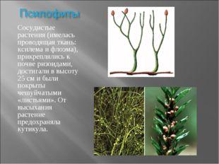 Сосудистые растения (имелась проводящая ткань: ксилема и флоэма), прикрепляли