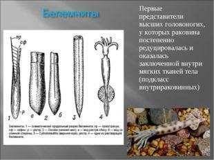 Первые представители высших головоногих, у которых раковина постепенно редуци