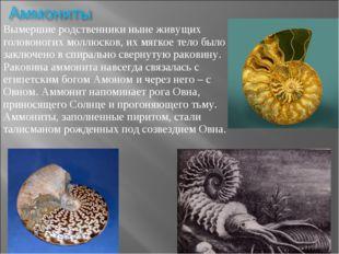 Вымершие родственники ныне живущих головоногих моллюсков, их мягкое тело было