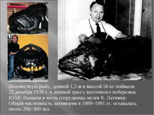 Неизвестную рыбу, длиной 1,5 м и массой 50 кг поймали 22 декабря 1938 г. в до