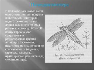 В палеозое насекомые были единственными летающими животными. Некоторые виды с