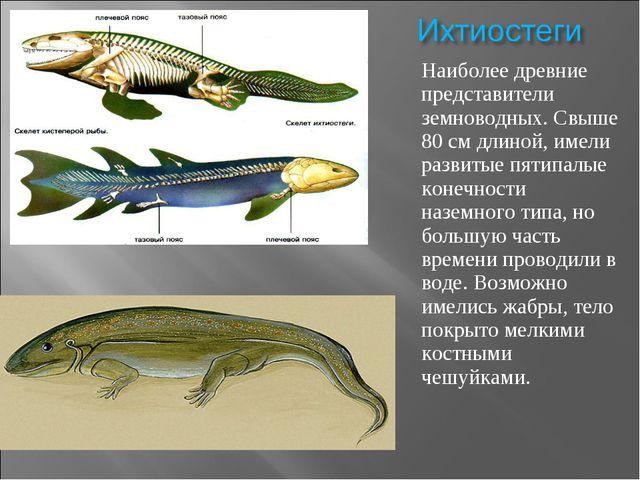 Наиболее древние представители земноводных. Свыше 80 см длиной, имели развиты...
