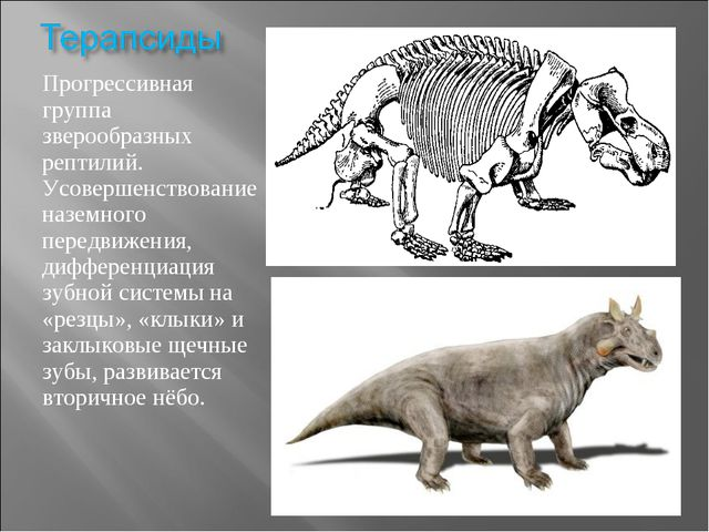 Прогрессивная группа зверообразных рептилий. Усовершенствование наземного пер...