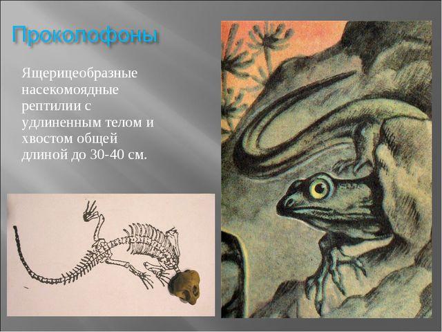 Ящерицеобразные насекомоядные рептилии с удлиненным телом и хвостом общей дли...