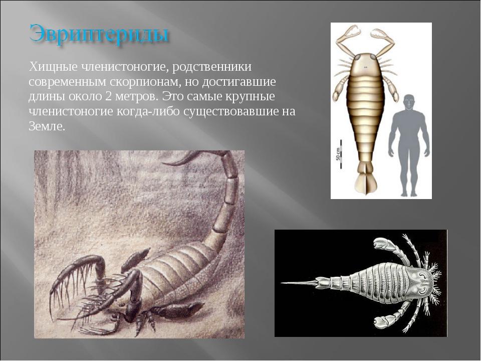 Хищные членистоногие, родственники современным скорпионам, но достигавшие дли...