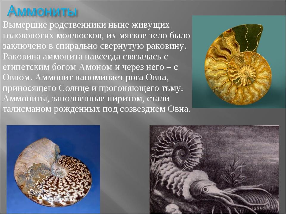 Вымершие родственники ныне живущих головоногих моллюсков, их мягкое тело было...