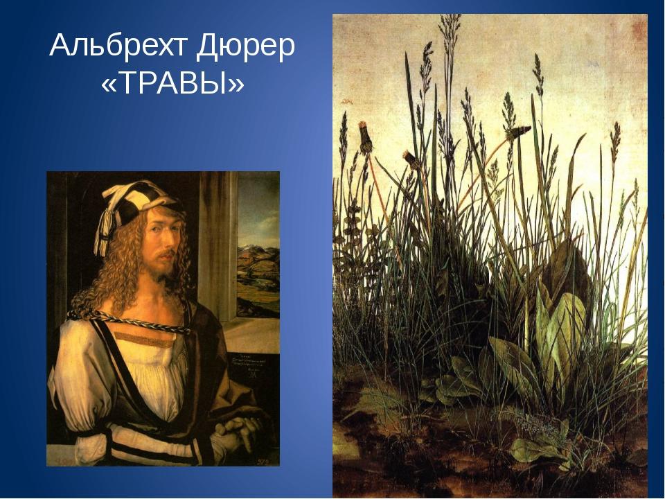 Альбрехт Дюрер «ТРАВЫ»
