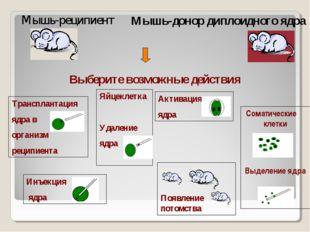 Выберите возможные действия Мышь-реципиент Мышь-донор диплоидного ядра Инъекц