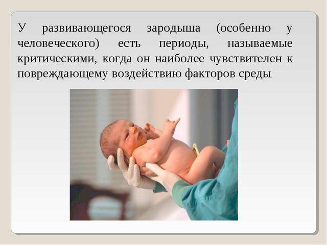 У развивающегося зародыша (особенно у человеческого) есть периоды, называемые...