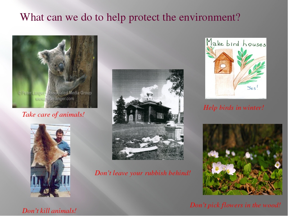 What can we do to help protect the environment? Take care of animals! Don't k...