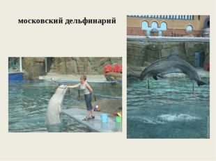 московский дельфинарий