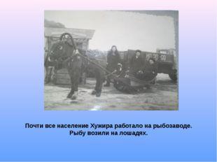 Почти все население Хужира работало на рыбозаводе. Рыбу возили на лошадях.