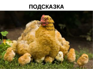 ПОДСКАЗКА