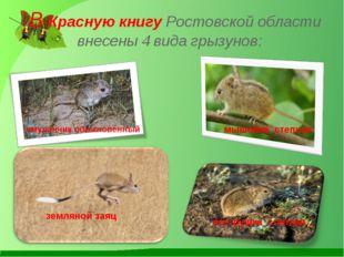 В Красную книгу Ростовской области внесены 4 вида грызунов: земляной заяц ем