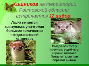 Хищников на территории Ростовской области встречается 12 видов. Ласка питаетс