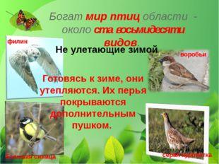 Богат мир птиц области - около ста восьмидесяти видов. Не улетающие зимой Гот