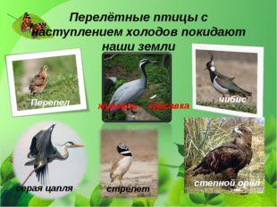 Перелётные птицы с наступлением холодов покидают наши земли степной орёл стре