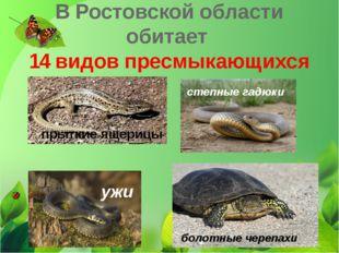 В Ростовской области обитает 14 видов пресмыкающихся прыткие ящерицы ужи боло
