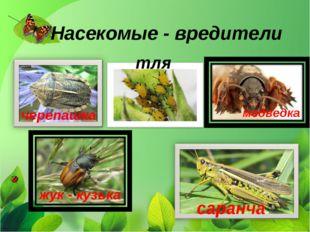 Насекомые - вредители тля медведка жук - кузька черепашка саранча