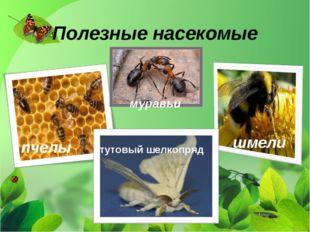 Полезные насекомые муравьи шмели пчелы тутовый шелкопряд
