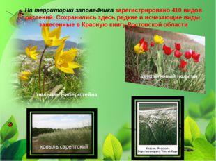 На территории заповедника зарегистрировано 410 видов растений. Сохранились з