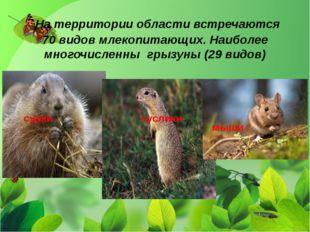 На территории области встречаются 70 видов млекопитающих. Наиболее многочисл