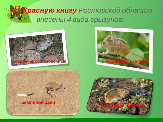 В Красную книгу Ростовской области внесены 4 вида грызунов: земляной заяц ем...