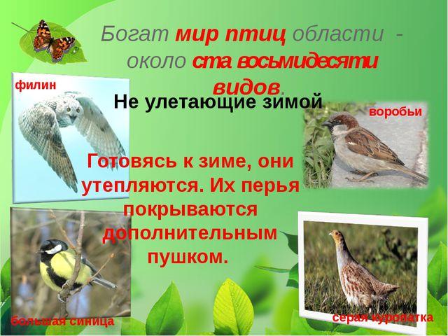 Богат мир птиц области - около ста восьмидесяти видов. Не улетающие зимой Гот...