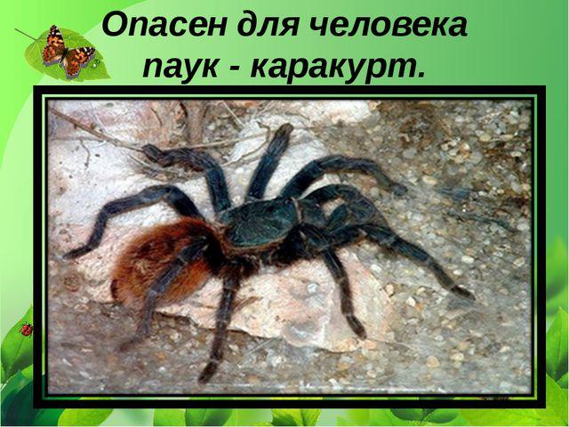 Опасен для человека паук - каракурт.