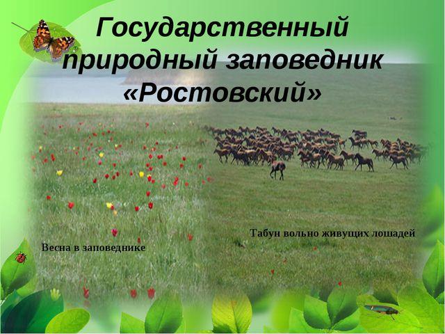 Государственный природный заповедник «Ростовский» Весна в заповеднике Табун в...